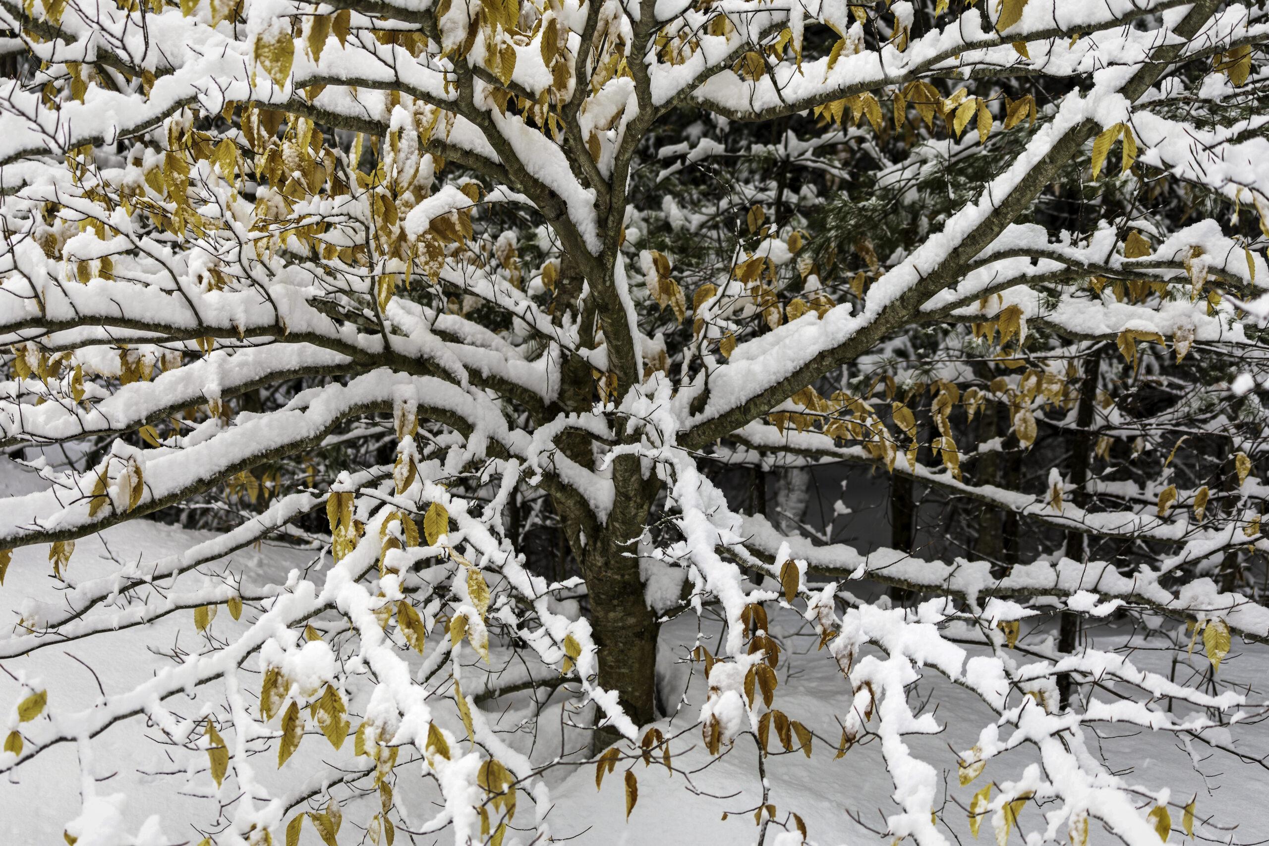 Snow at Last, Snow at Last!